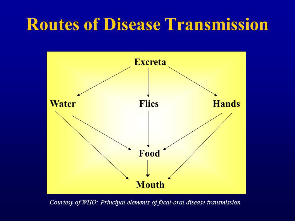 Routes of Disease Transmission Excreta WaterHandsFlies Food Mouth Courtesy of WHO: Principal elements of fecal-oral disease transmission