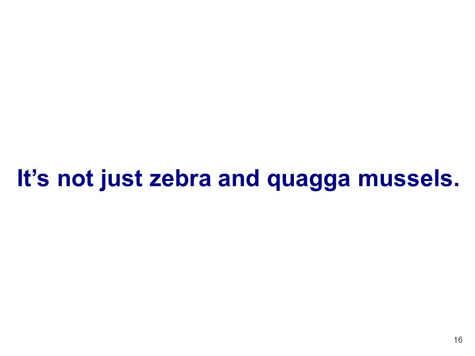 16 Its not just zebra and quagga mussels.