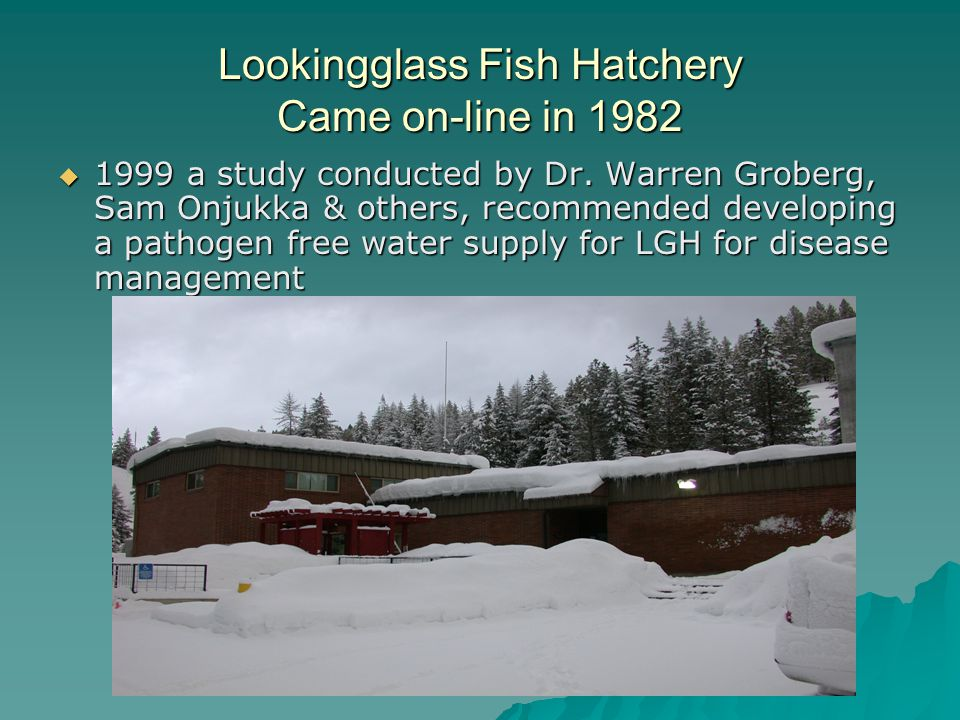 Lookingglass Fish Hatchery Came on-line in 1982 1999 a study conducted by Dr.