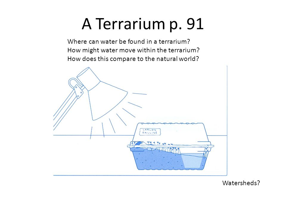 A Terrarium p. 91 Where can water be found in a terrarium.