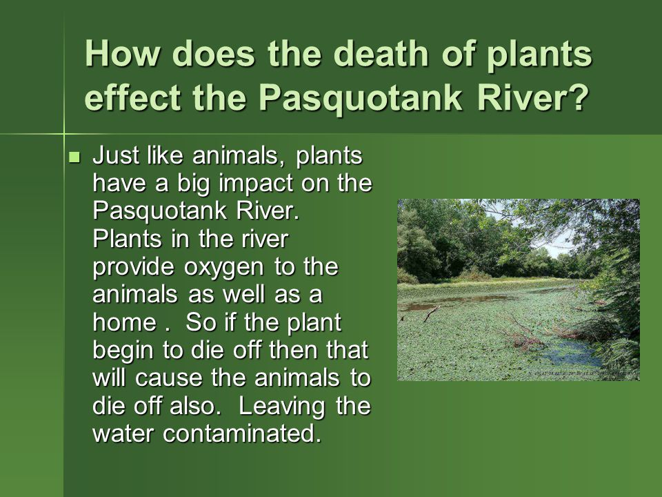 How does the death of plants effect the Pasquotank River.