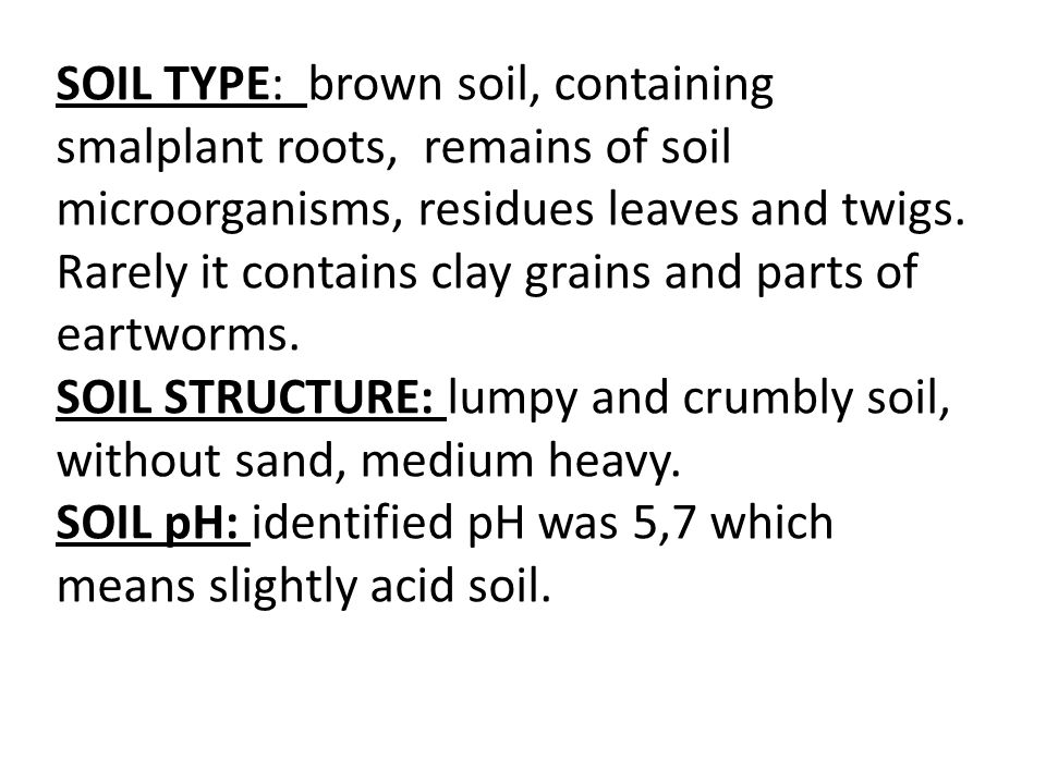 SOIL TYPE: brown soil, containing smalplant roots, remains of soil microorganisms, residues leaves and twigs.