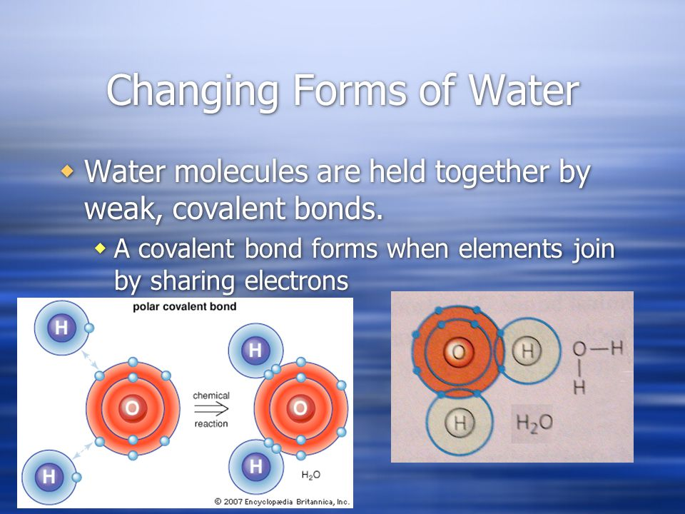 Changing Forms of Water Water molecules are held together by weak, covalent bonds.