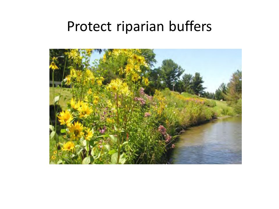 Protect riparian buffers