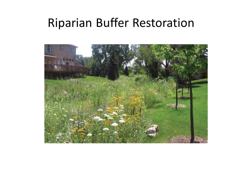 Riparian Buffer Restoration