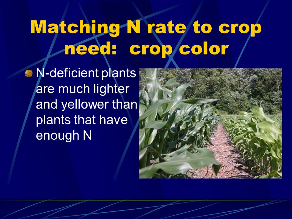 Matching N rate to crop need: crop color N-deficient plants are much lighter and yellower than plants that have enough N
