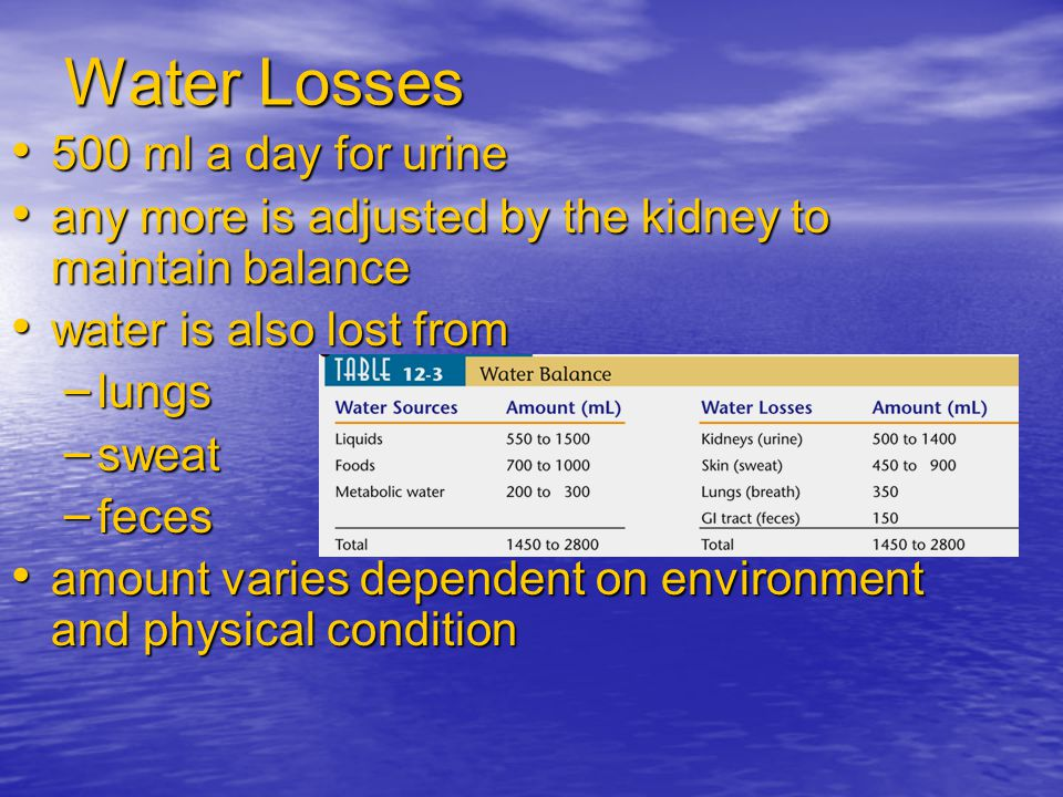 Water Losses 500 ml a day for urine 500 ml a day for urine any more is adjusted by the kidney to maintain balance any more is adjusted by the kidney t