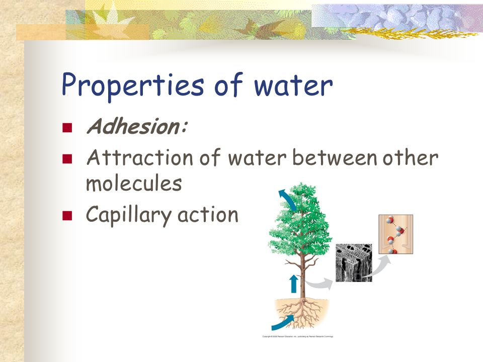 Properties of water Adhesion: Attraction of water between other molecules Capillary action