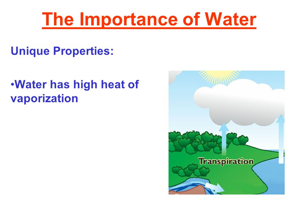 The Importance of Water Unique Properties: Water has high heat of vaporization