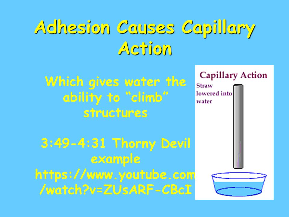 Adhesion Causes Capillary Action Which gives water the ability to climb structures 3:49-4:31 Thorny Devil example https://www.youtube.com /watch?v=ZUs