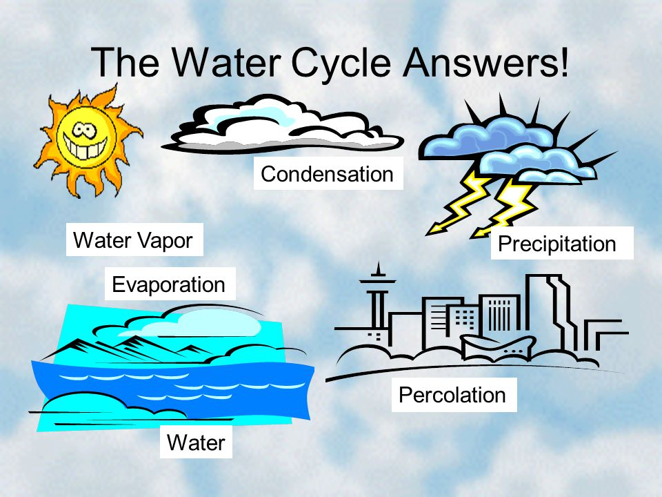 The Water Cycle Answers! Condensation Percolation Water Vapor Water Precipitation Evaporation