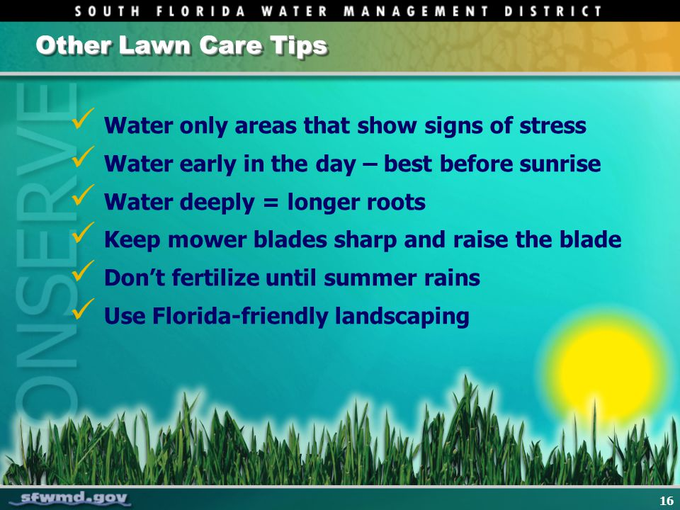 16 Other Lawn Care Tips Water only areas that show signs of stress Water early in the day – best before sunrise Water deeply = longer roots Keep mower blades sharp and raise the blade Dont fertilize until summer rains Use Florida-friendly landscaping