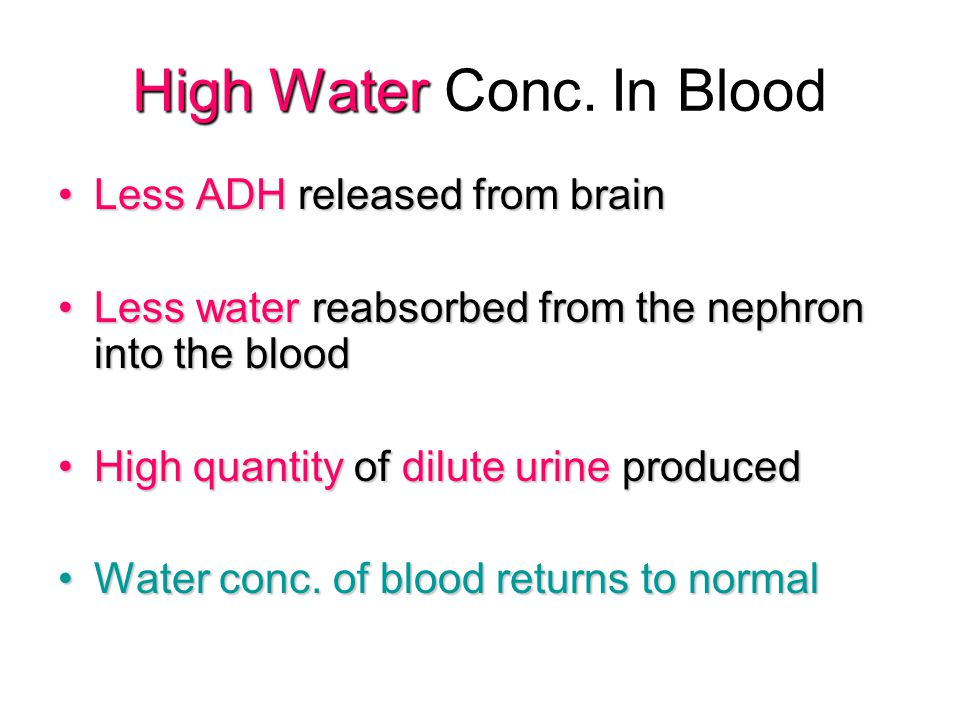 Low Water Conc.In Blood Lots of ADH released from the brain.Lots of ADH released from the brain.