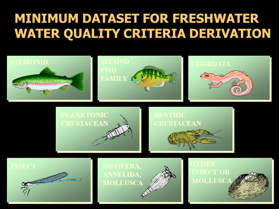 MINIMUM DATASET FOR FRESHWATER WATER QUALITY CRITERIA DERIVATION SALMONID SECOND FISH FAMILY CHORDATA PLANKTONIC CRUSTACEAN BENTHIC CRUSTACEAN INSECT ROTIFERA, ANNELIDA, MOLLUSCA OTHER INSECT OR MOLLUSCA