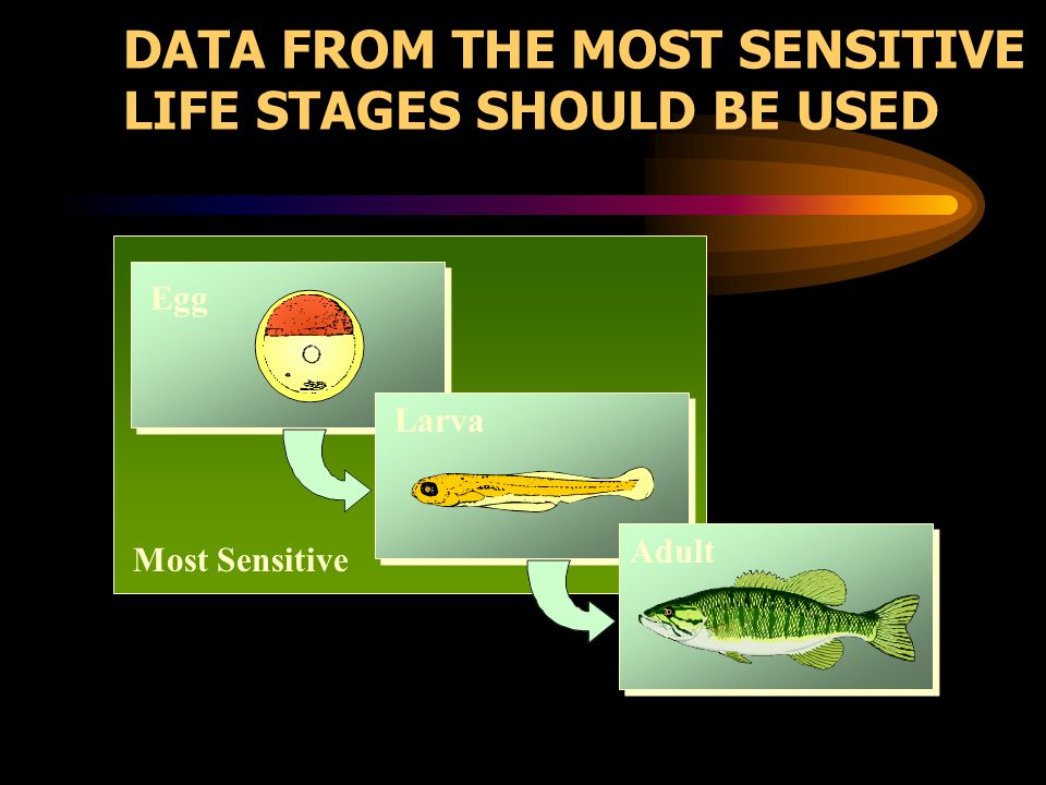 DATA FROM THE MOST SENSITIVE LIFE STAGES SHOULD BE USED Most Sensitive Egg Larva Adult