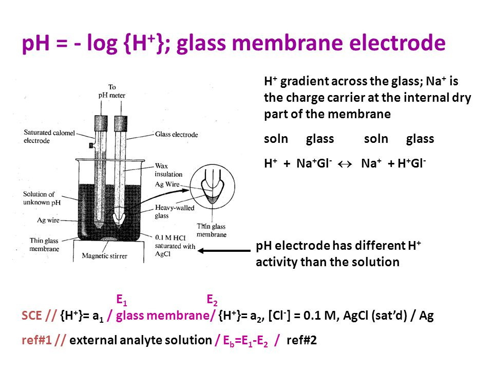 pH = - log {H + }; glass membrane electrode pH electrode has different H + activity than the solution SCE // {H + }= a 1 / glass membrane/ {H + }= a 2