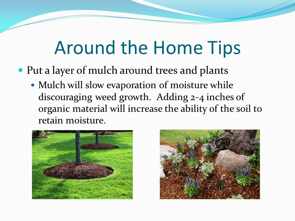 Around the Home Tips Put a layer of mulch around trees and plants Mulch will slow evaporation of moisture while discouraging weed growth. Adding 2-4 i