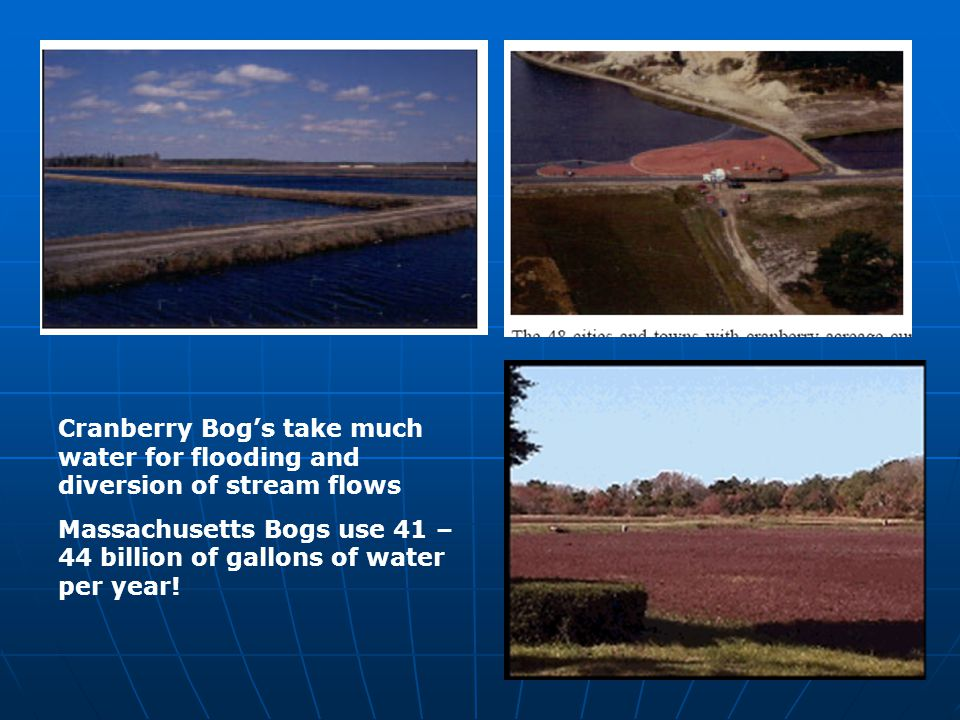 Cranberry Bogs take much water for flooding and diversion of stream flows Massachusetts Bogs use 41 – 44 billion of gallons of water per year!