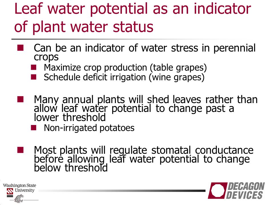 Leaf water potential as an indicator of plant water status Can be an indicator of water stress in perennial crops Maximize crop production (table grap