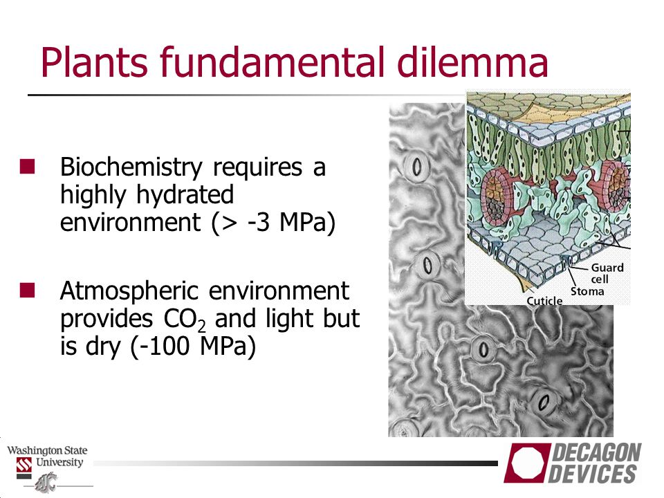 Plants fundamental dilemma Biochemistry requires a highly hydrated environment (> -3 MPa) Atmospheric environment provides CO 2 and light but is dry (