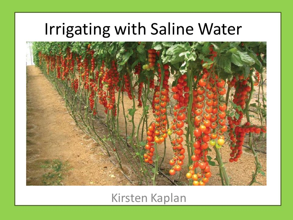 Irrigating with Saline Water Kirsten Kaplan