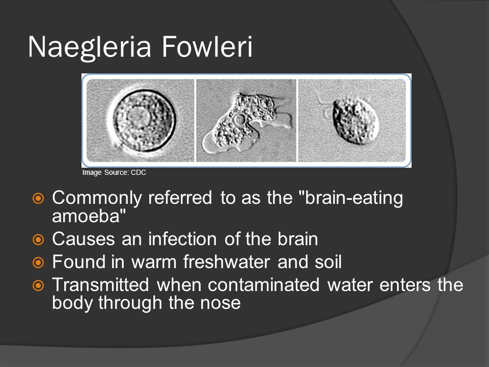 Naegleria Fowleri Commonly referred to as the