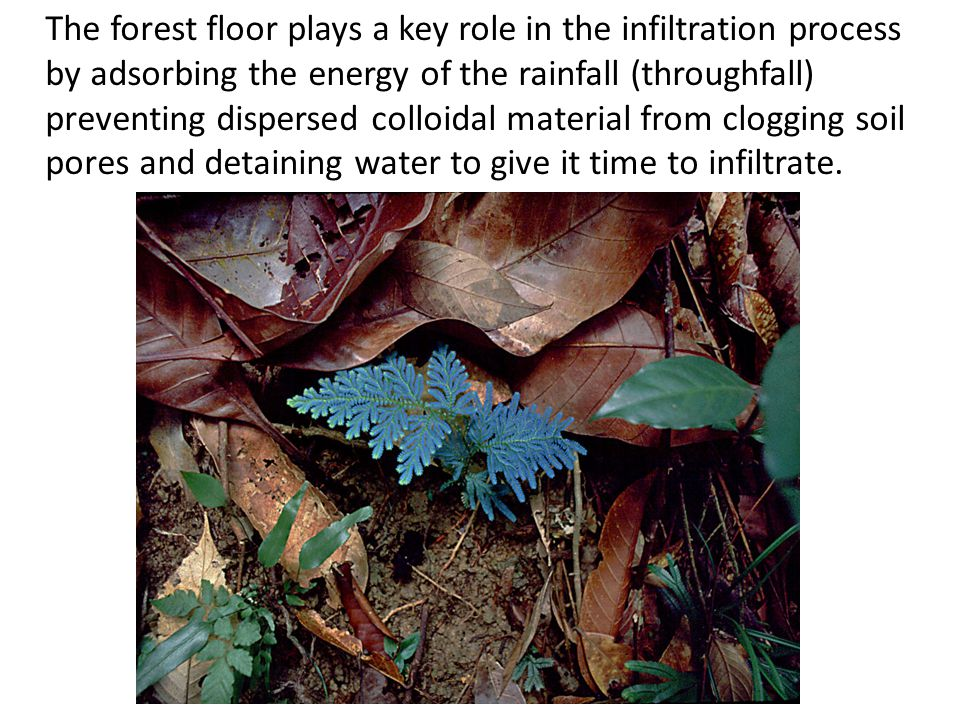 The forest floor plays a key role in the infiltration process by adsorbing the energy of the rainfall (throughfall) preventing dispersed colloidal material from clogging soil pores and detaining water to give it time to infiltrate.