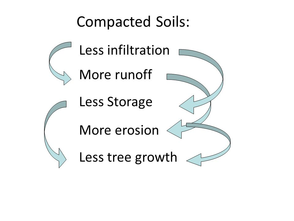 Less infiltration More runoff More erosion Less tree growth Compacted Soils: Less Storage