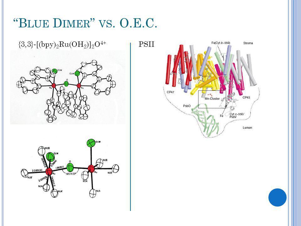 B LUE D IMER VS. O.E.C. {3,3}-[(bpy) 2 Ru(OH 2 )] 2 O 4+ PSII