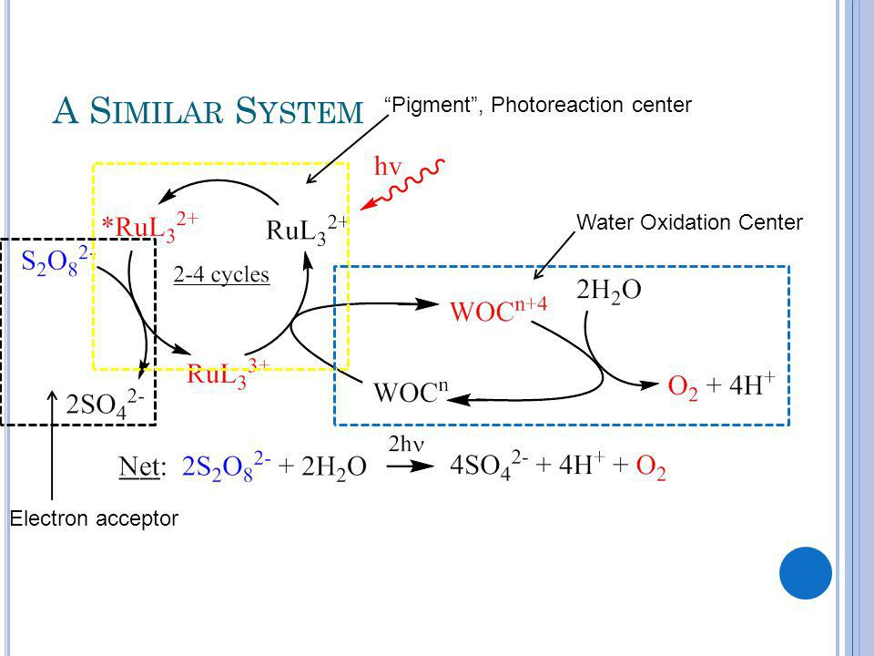 A S IMILAR S YSTEM Electron acceptor Pigment, Photoreaction center Water Oxidation Center