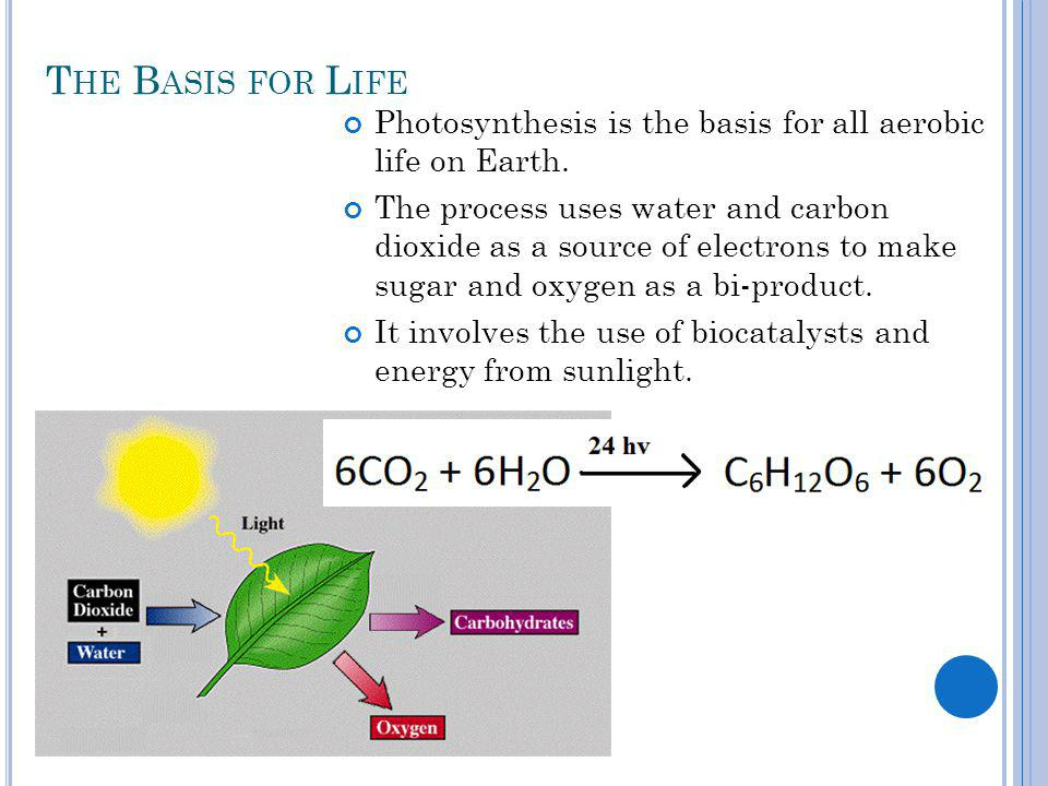 T HE B ASIS FOR L IFE Photosynthesis is the basis for all aerobic life on Earth.