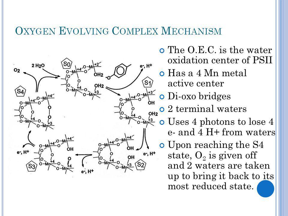 O XYGEN E VOLVING C OMPLEX M ECHANISM The O.E.C.