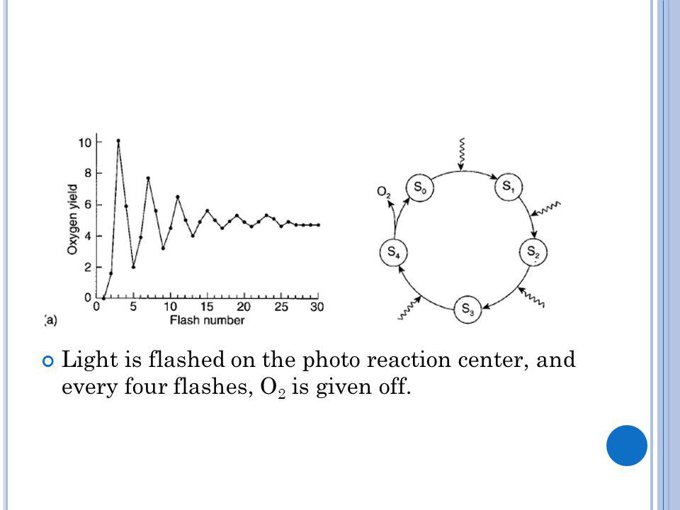 Light is flashed on the photo reaction center, and every four flashes, O 2 is given off.