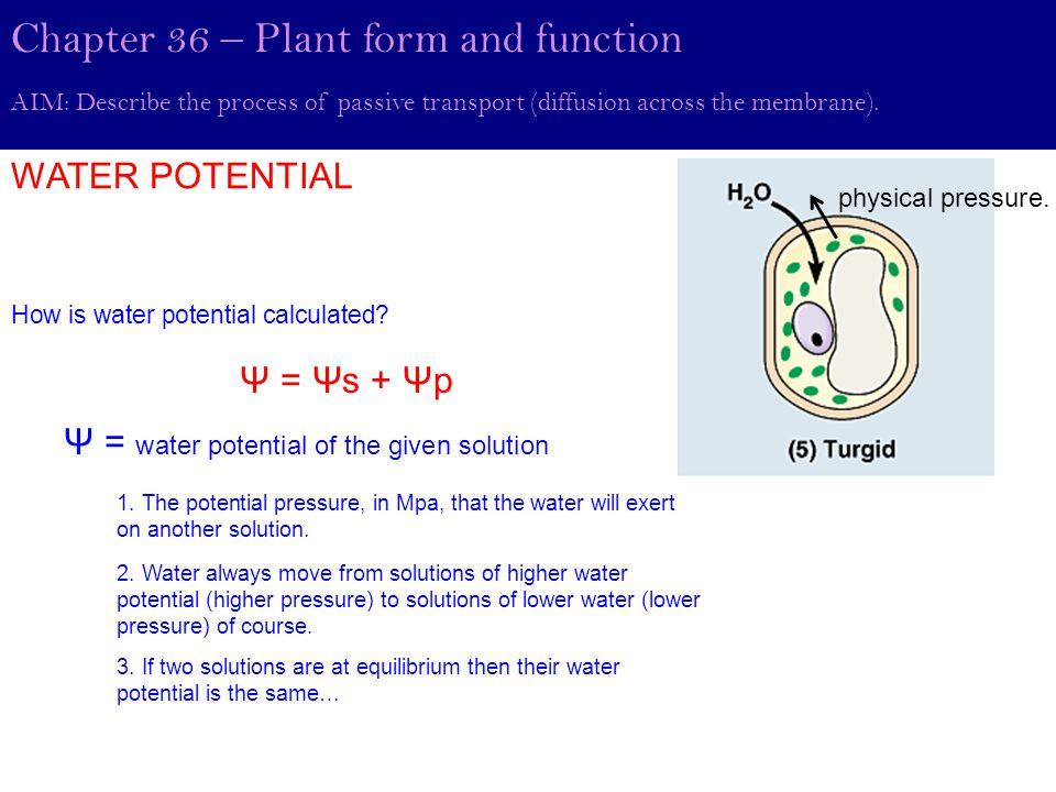 Elodea Aquatic Plant (not algae)