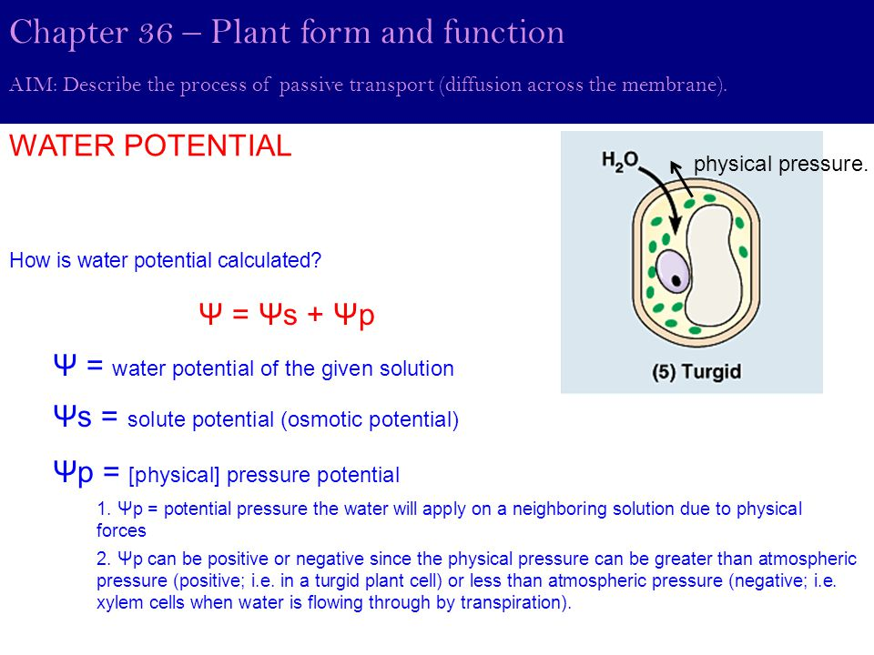 Quantitative analysis of WATER POTENTIAL AIM: Describe the process of passive transport (diffusion across the membrane).