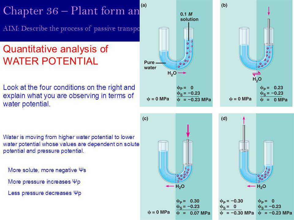 Lab 4: Diffusion and Osmosis