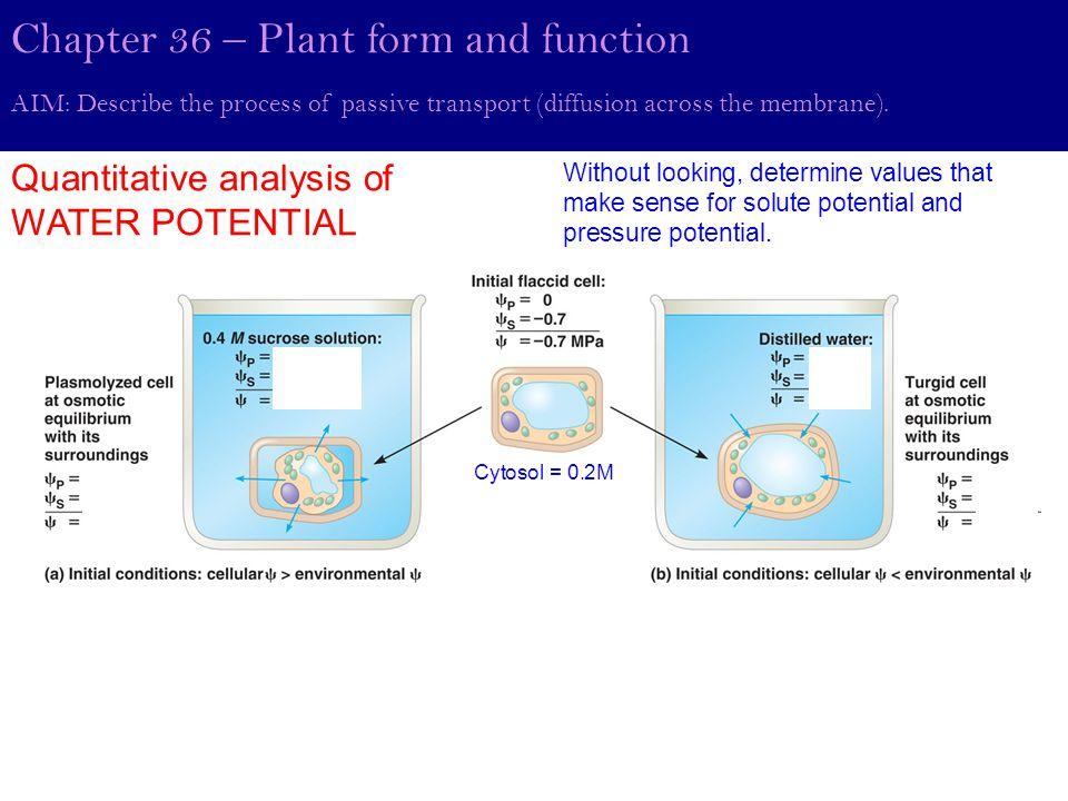 Chapter 36 – Plant form and function Quantitative analysis of WATER POTENTIAL AIM: Describe the process of passive transport (diffusion across the membrane).
