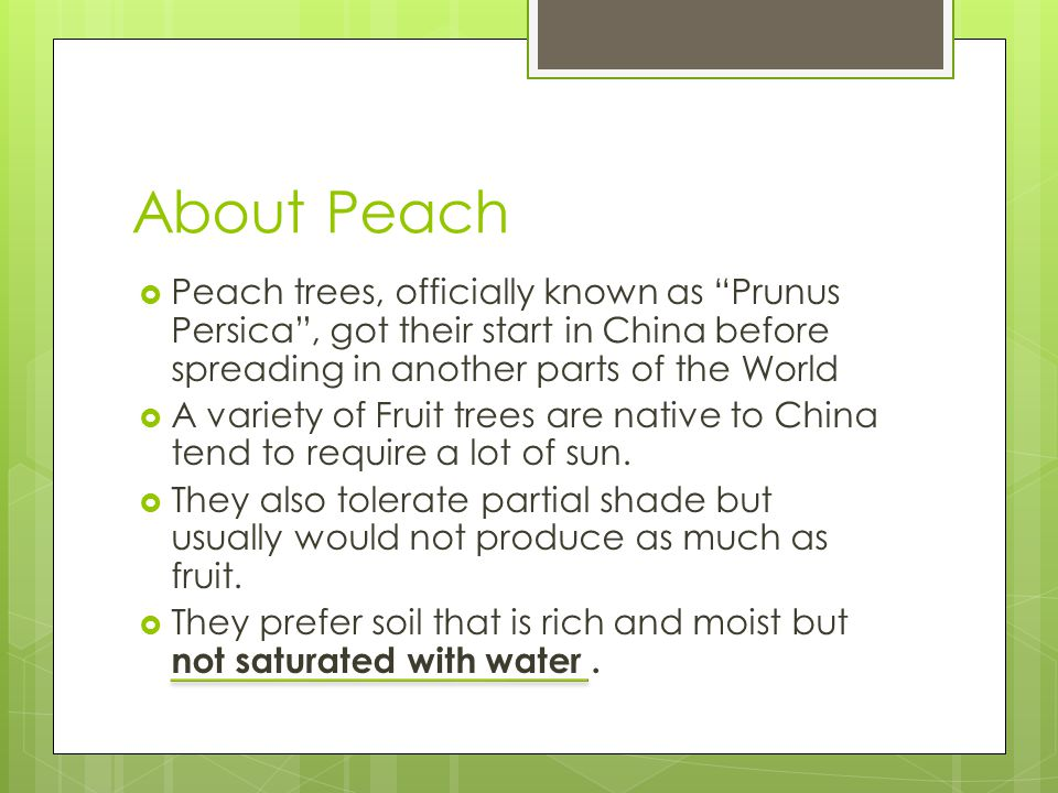 About Peach Peach trees, officially known as Prunus Persica, got their start in China before spreading in another parts of the World A variety of Fruit trees are native to China tend to require a lot of sun.