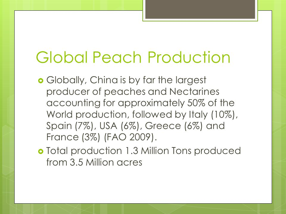 Global Peach Production Globally, China is by far the largest producer of peaches and Nectarines accounting for approximately 50% of the World production, followed by Italy (10%), Spain (7%), USA (6%), Greece (6%) and France (3%) (FAO 2009).