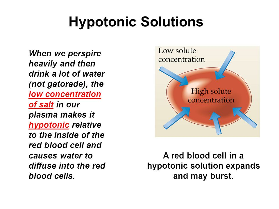 Hypotonic Solutions When we perspire heavily and then drink a lot of water (not gatorade), the low concentration of salt in our plasma makes it hypotonic relative to the inside of the red blood cell and causes water to diffuse into the red blood cells.