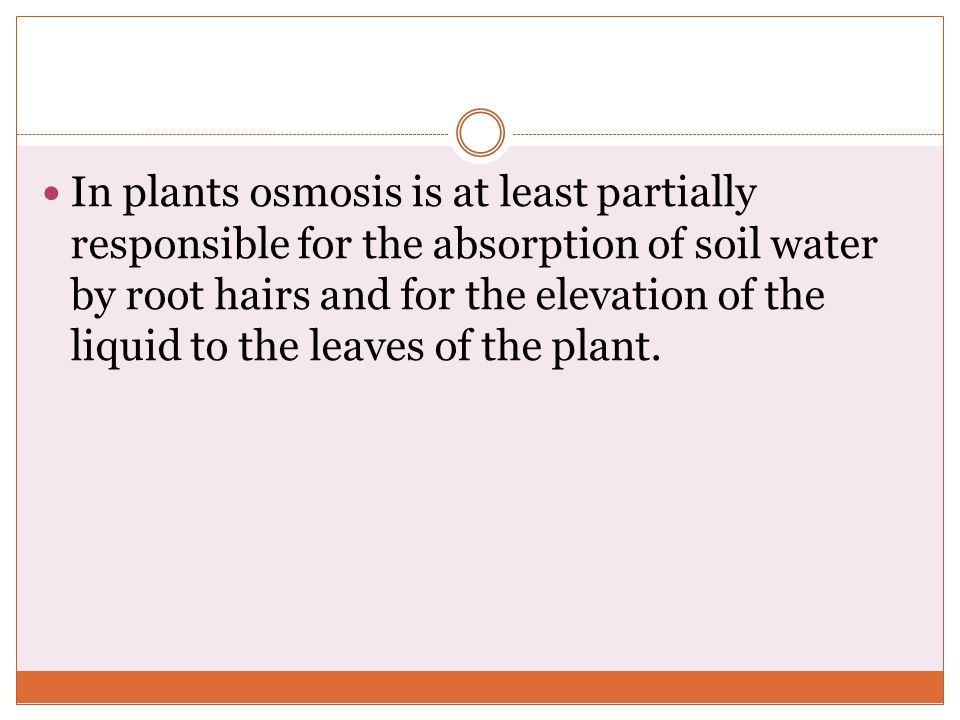 Osmosis in Plant Roots in Plants Osmosis is at Least Partially Responsible For The Absorption of