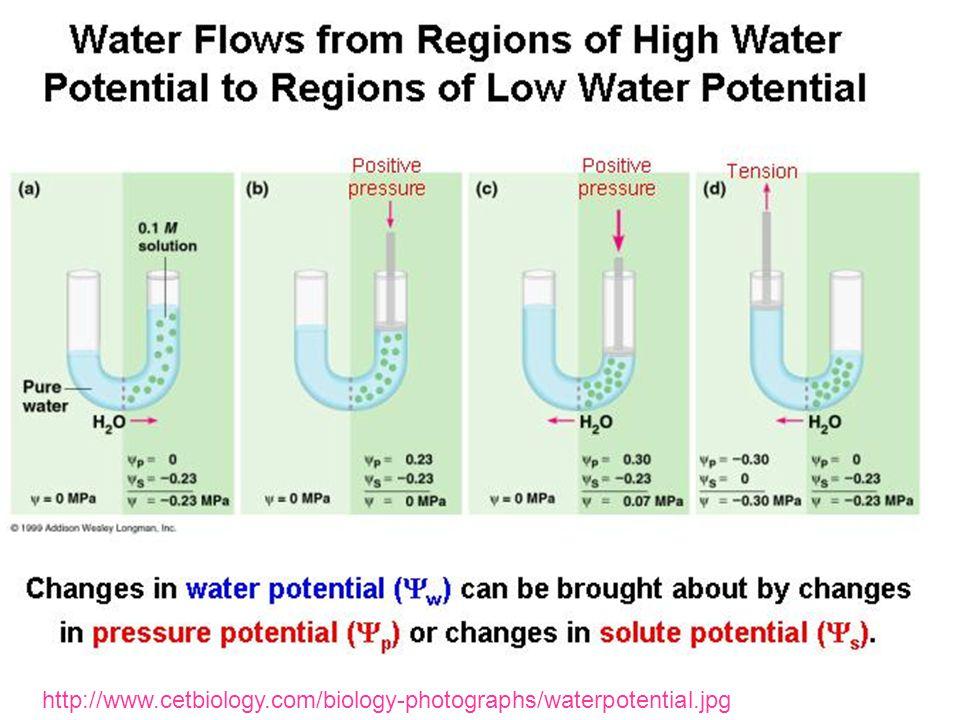 http://www.cetbiology.com/biology-photographs/waterpotential.jpg