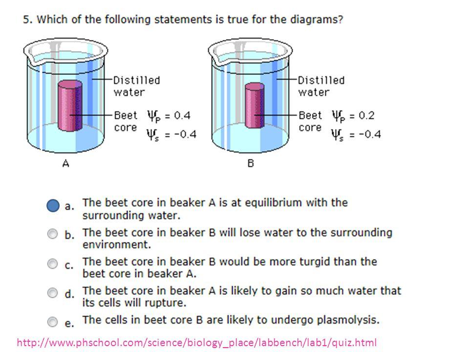 http://www.phschool.com/science/biology_place/labbench/lab1/quiz.html