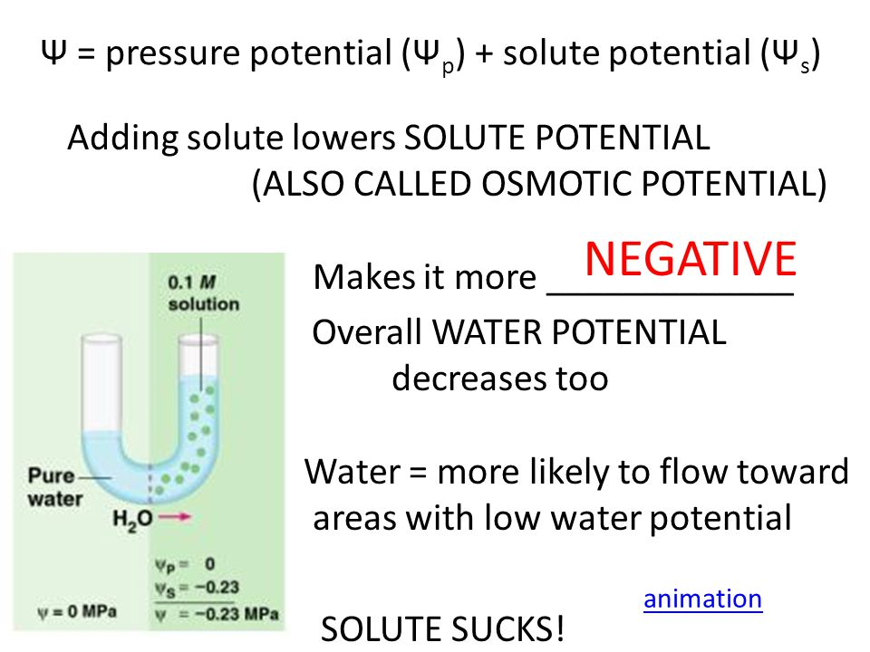 In open system (like beaker) pressure potential Ψ p = O In closed system (like plant cell with rigid cell wall) pressure potential Ψ p can be a positive or negative number, or zero.