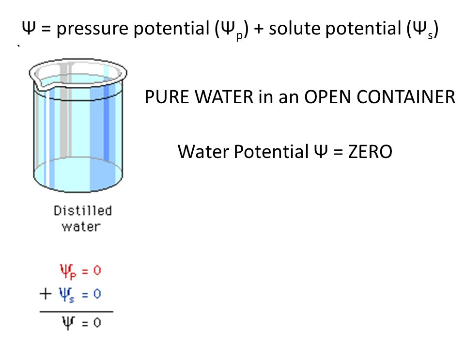 http://www.cetbiology.com/biology-photographs/waterpotential.jpg