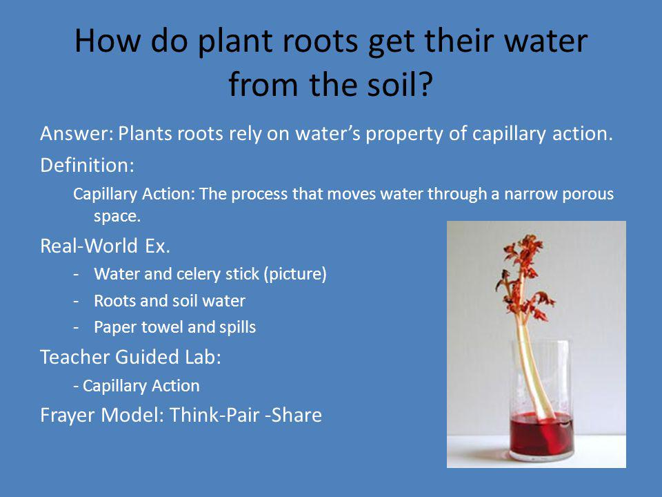 How do plant roots get their water from the soil? Answer: Plants roots rely on waters property of capillary action. Definition: Capillary Action: The