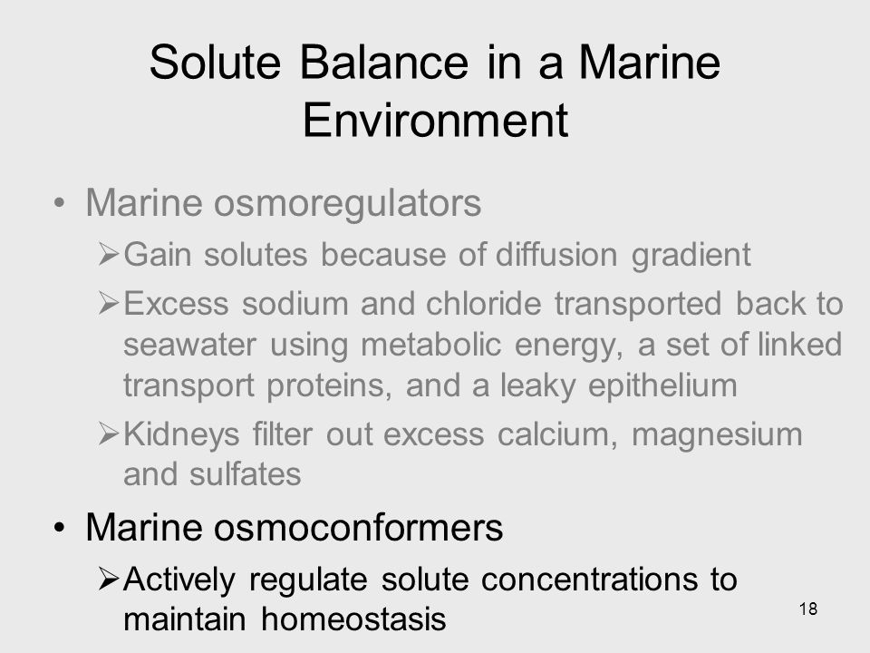 18 Solute Balance in a Marine Environment Marine osmoregulators Gain solutes because of diffusion gradient Excess sodium and chloride transported back