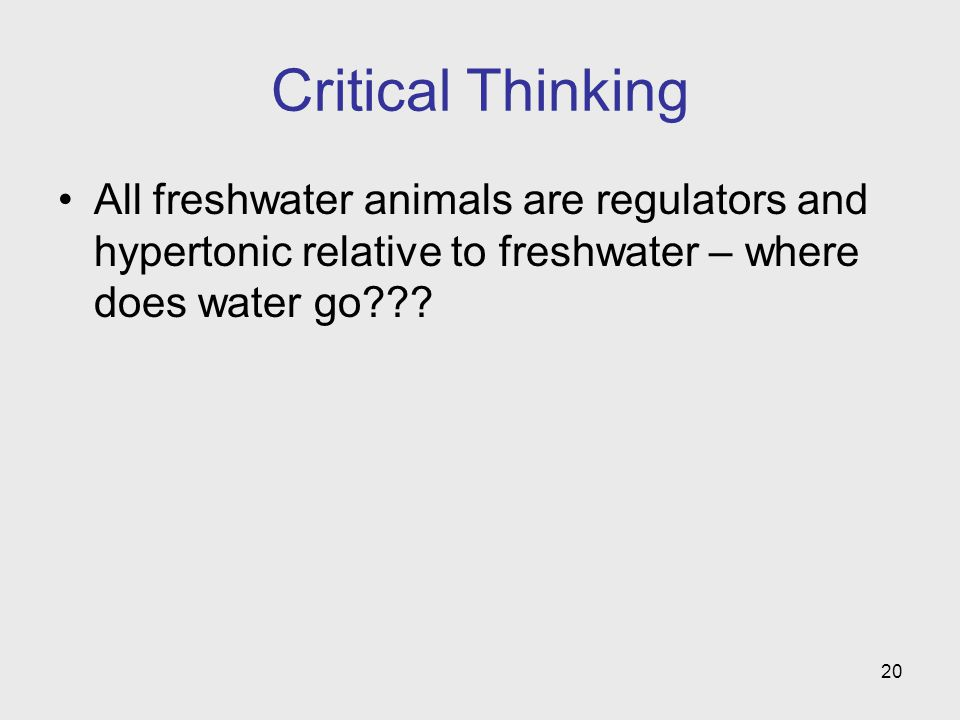 20 Critical Thinking All freshwater animals are regulators and hypertonic relative to freshwater – where does water go???