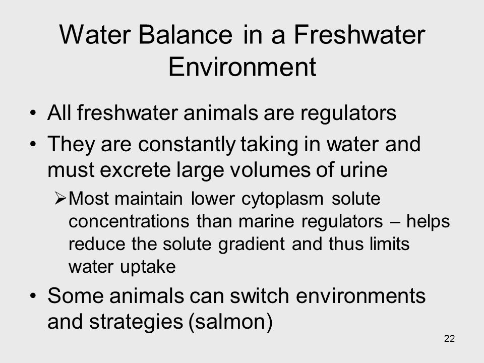 22 Water Balance in a Freshwater Environment All freshwater animals are regulators They are constantly taking in water and must excrete large volumes