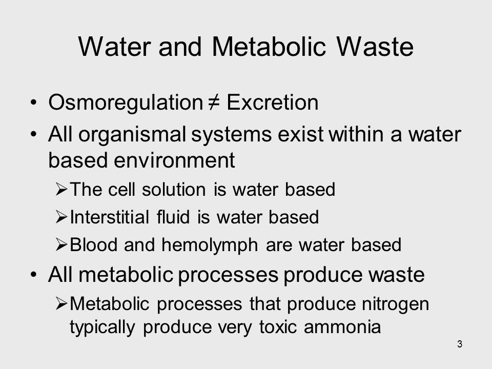 3 Osmoregulation Excretion All organismal systems exist within a water based environment The cell solution is water based Interstitial fluid is water